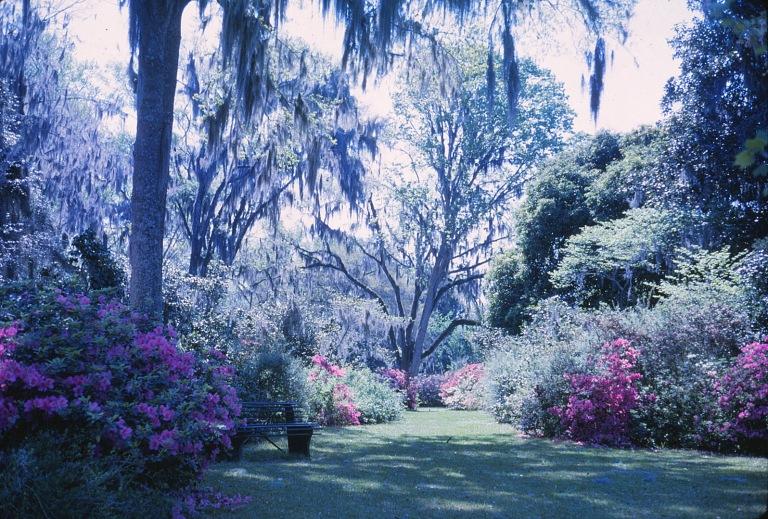 Gardens Spanish Moss
